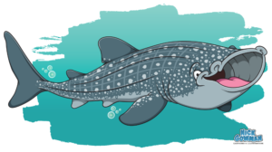 cartoon whale shark